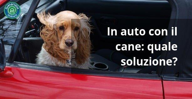 accessori per viaggiare in auto con il cane